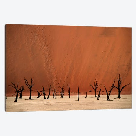 Deadvlei Canvas Print #OXM649} by Hans-Wolfgang Hawerkamp Canvas Wall Art