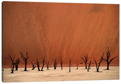 Deadvlei Canvas Art Print
