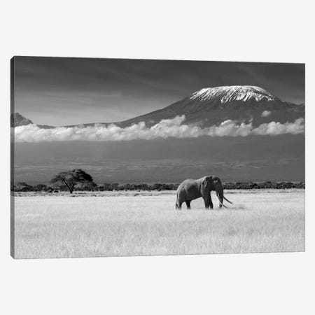 Lost Colors II Canvas Print #OXM669} by ibrahim Canakci Canvas Wall Art