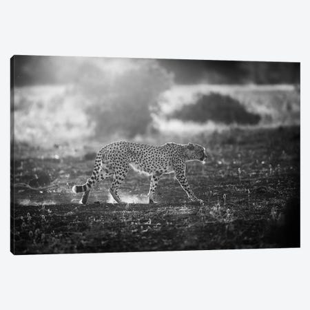 Backlit Cheetah Canvas Print #OXM679} by Jaco Marx Canvas Art Print