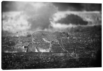 Backlit Cheetah Canvas Art Print