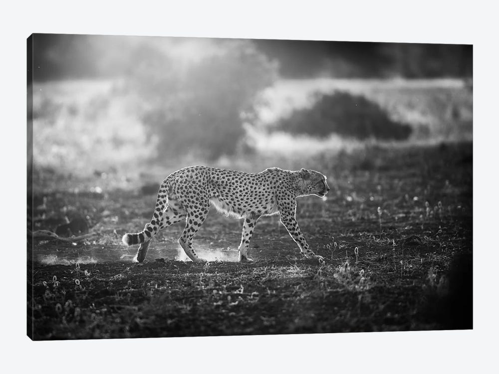 Backlit Cheetah by Jaco Marx 1-piece Canvas Print