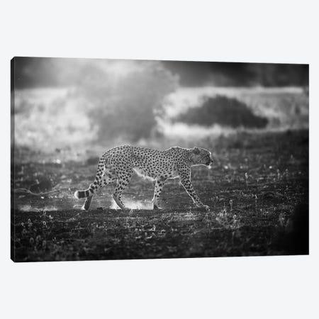 Backlit Cheetah Canvas Print #OXM679} by Jaco Marx Canvas Art Print