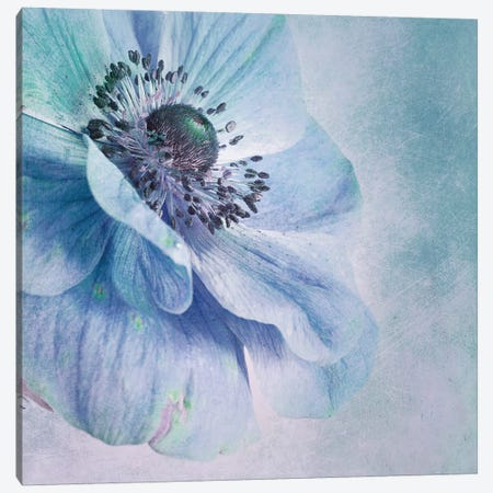 Shades Of Blue Canvas Print #OXM925} by Priska Wettstein Canvas Wall Art