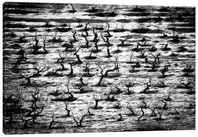 Tortured Souls Canvas Print #OXM94