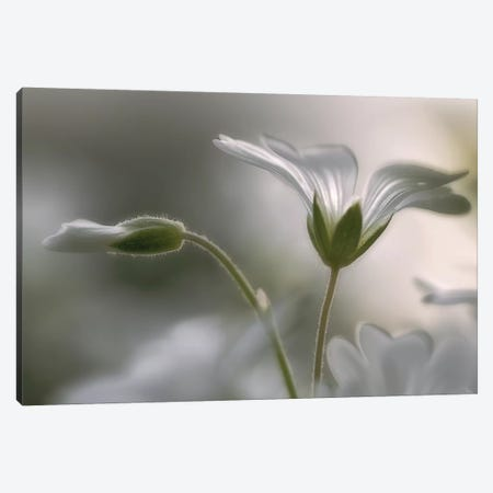 Translucent Canvas Print #OXM95} by Bjorn Emanuelson Canvas Print