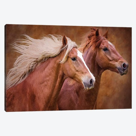 Purebred I Canvas Print #OZN1} by Ozana Sturgeon Art Print