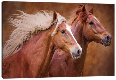 Purebred I Canvas Art Print