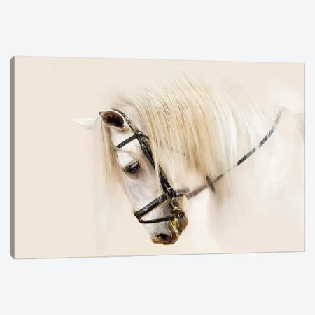 Purebred II Canvas Print #OZN2} by Ozana Sturgeon Canvas Art Print