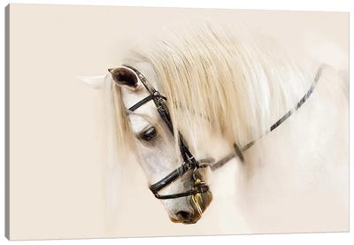 Purebred II Canvas Art Print