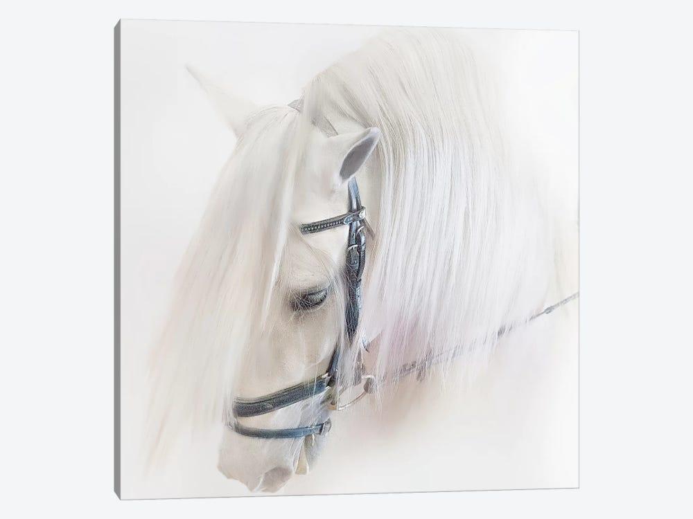 Purebred III by Ozana Sturgeon 1-piece Canvas Art