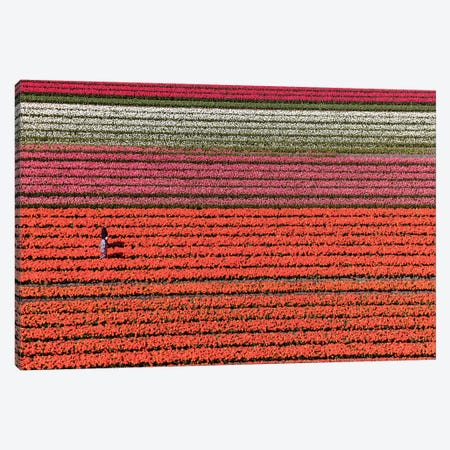 Aerial view of the tulip fields in North Holland, Netherlands Canvas Print #PAD10} by Peter Adams Canvas Art Print