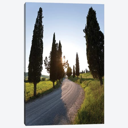 Cypress-lined Dirt Road, Tuscany Region, Italy Canvas Print #PAD1} by Peter Adams Canvas Print