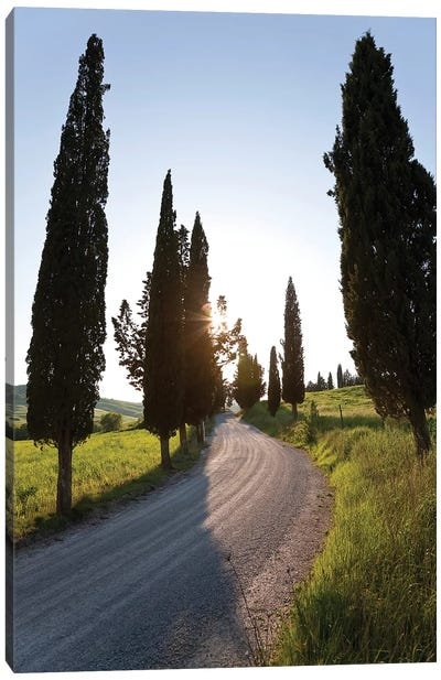Cypress-lined Dirt Road, Tuscany Region, Italy Canvas Art Print