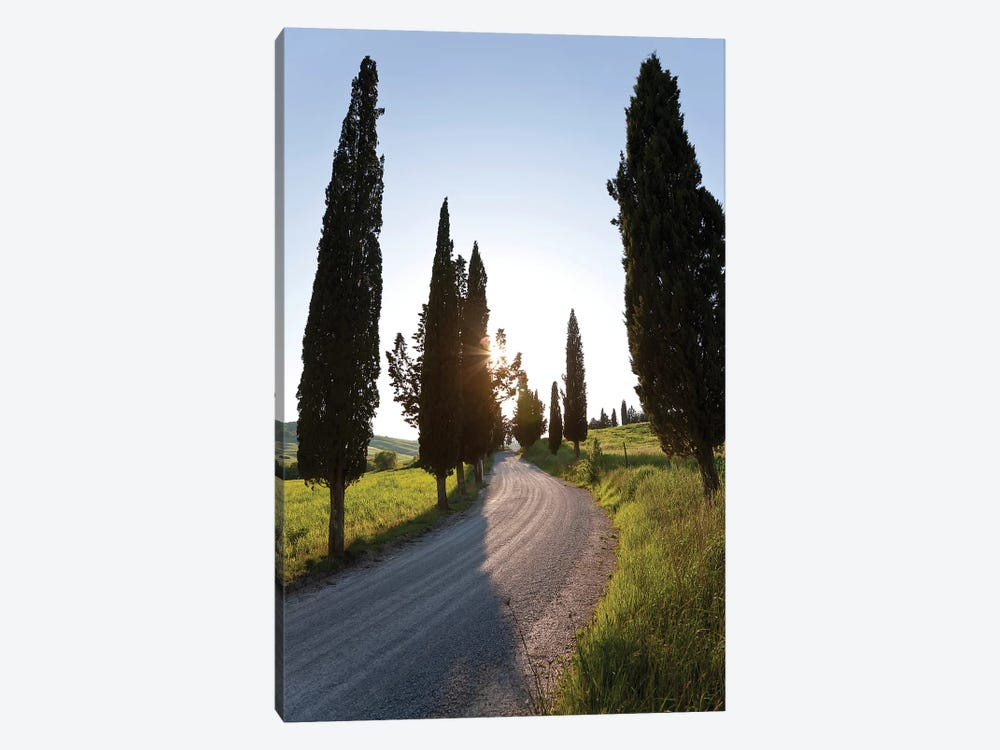 Cypress-lined Dirt Road, Tuscany Region, Italy by Peter Adams 1-piece Canvas Print