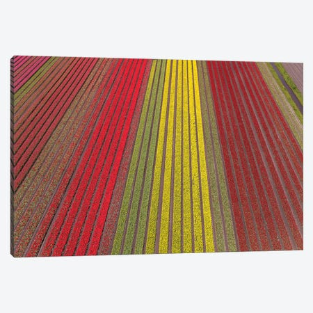 Aerial view of the tulip fields in North Holland, Netherlands Canvas Print #PAD6} by Peter Adams Canvas Artwork