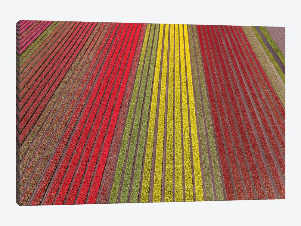 Aerial view of the tulip fields in North Holland, Netherlands by Peter Adams 1-piece Canvas Wall Art