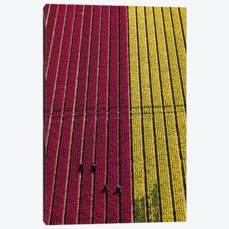 Aerial view of the tulip fields in North Holland, Netherlands Canvas Print #PAD7} by Peter Adams Canvas Artwork