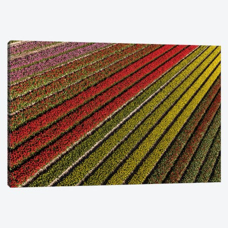 Aerial view of the tulip fields in North Holland, Netherlands Canvas Print #PAD8} by Peter Adams Canvas Print