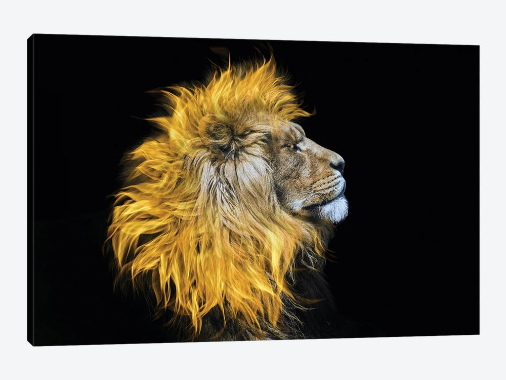 Flaming Mane by Paul Haag 1-piece Canvas Print