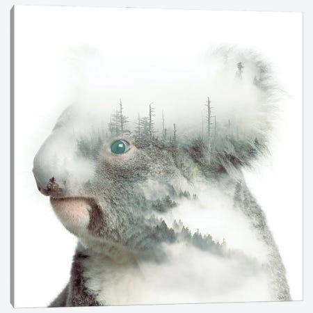 Koala Canvas Print #PAH112} by Paul Haag Canvas Print