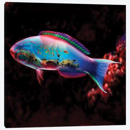 Fish Canvas Print #PAH11} by Paul Haag Canvas Art Print