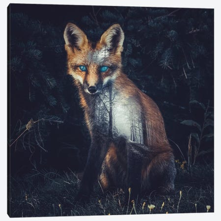 Fox II Canvas Print #PAH13} by Paul Haag Art Print