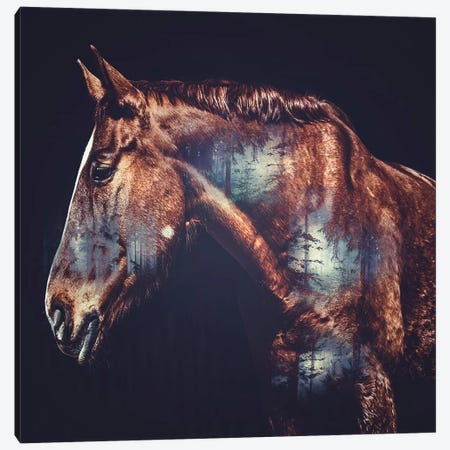 Horse Canvas Print #PAH18} by Paul Haag Canvas Print