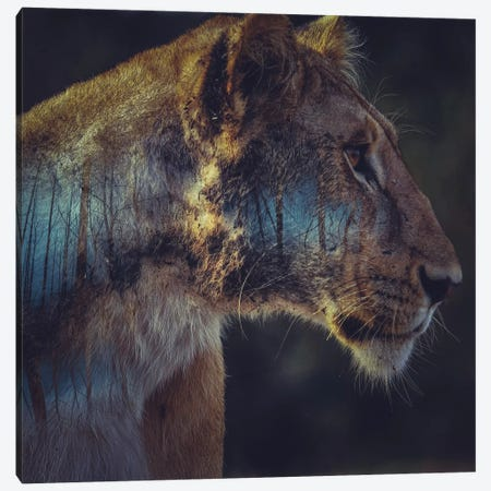 Lion Canvas Print #PAH19} by Paul Haag Canvas Art Print
