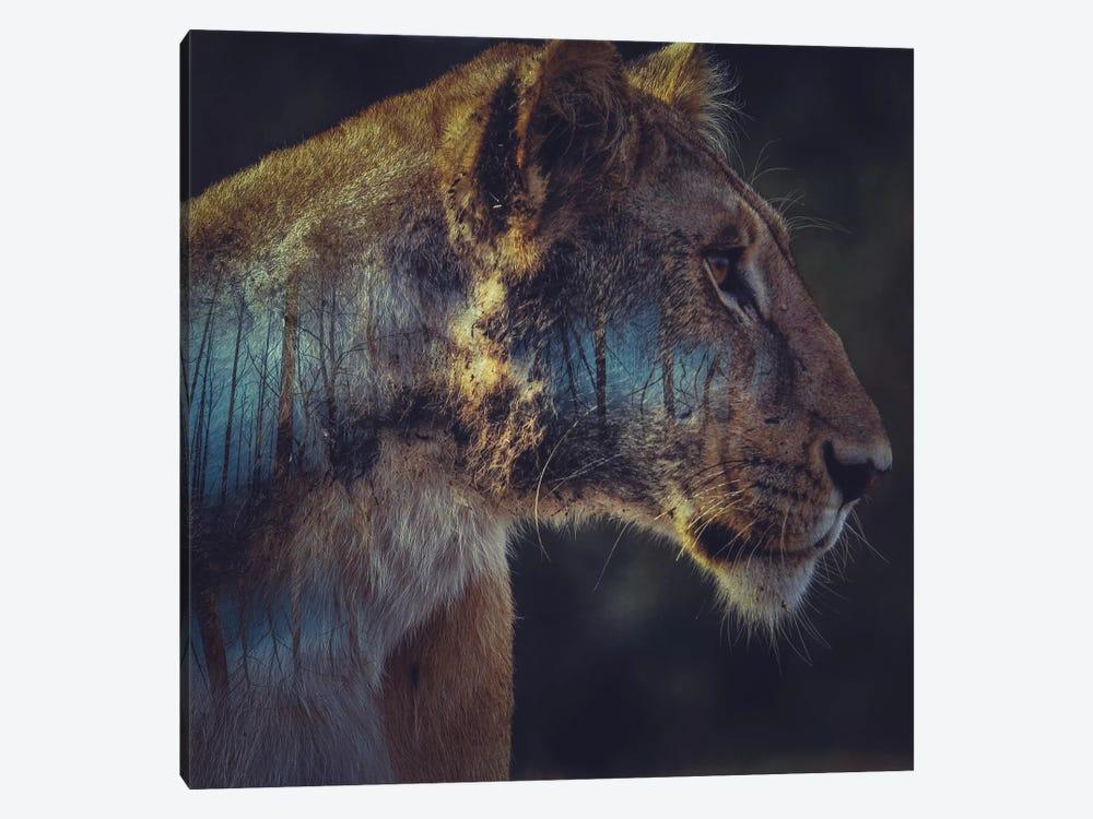 Lion by Paul Haag 1-piece Canvas Art Print