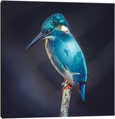 Aquarium Bird Canvas Art Print