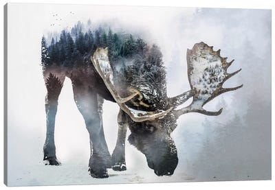 Nature Moose Canvas Art Print