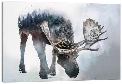Nature Moose Canvas Art Print