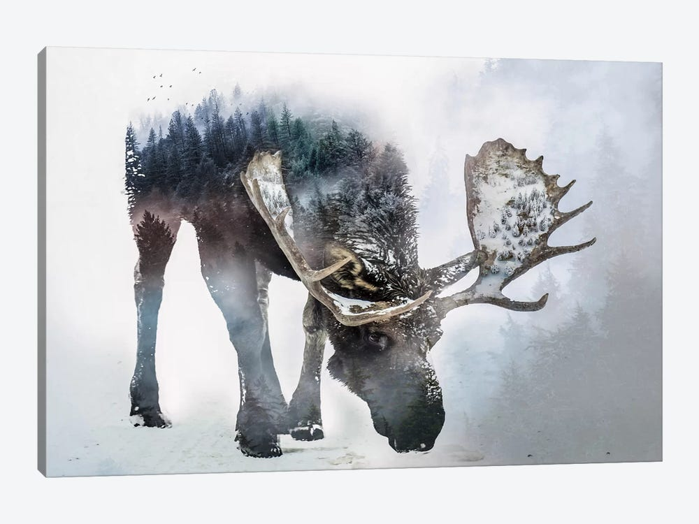 Nature Moose by Paul Haag 1-piece Canvas Art Print