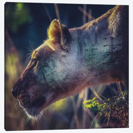 Head Canvas Print #PAH36} by Paul Haag Canvas Wall Art