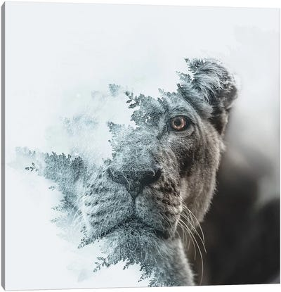 Lioness Canvas Art Print