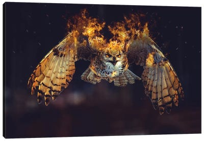 Owl On Fire Canvas Art Print
