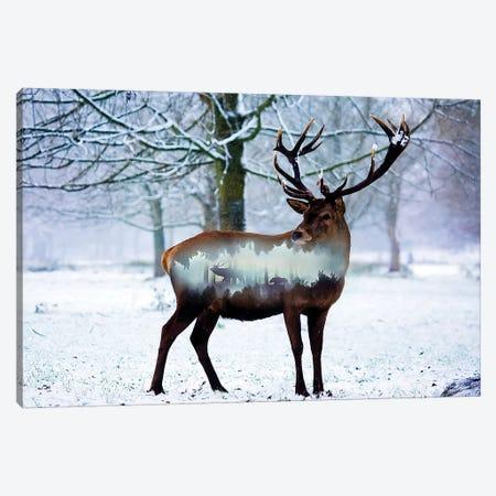 Winter Deer I Canvas Print #PAH48} by Paul Haag Canvas Art