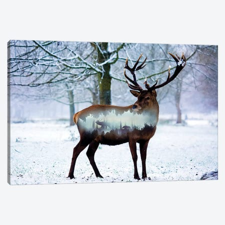 Winter Deer I Canvas Print #PAH48} by Paul Haag Canvas Art