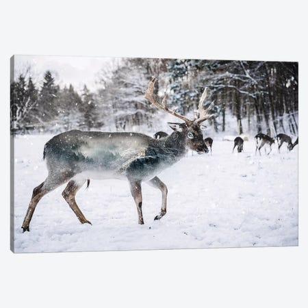 Winter Deer II Canvas Print #PAH49} by Paul Haag Canvas Wall Art