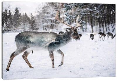 Winter Deer II Canvas Art Print