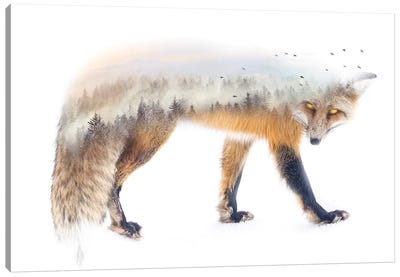 Nature Fox Canvas Art Print