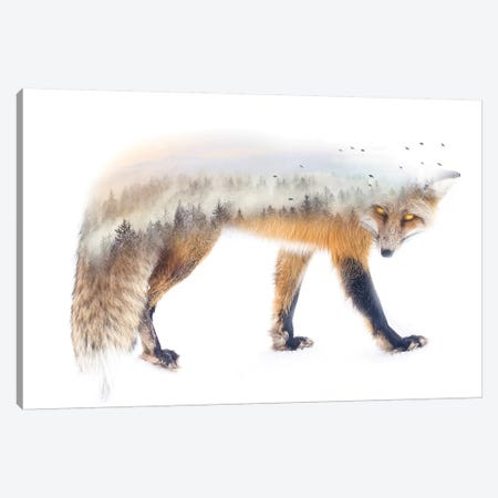 Nature Fox Canvas Print #PAH51} by Paul Haag Canvas Art Print