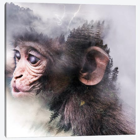 Monkey Canvas Print #PAH55} by Paul Haag Canvas Artwork