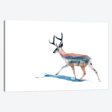 Winter Deer Canvas Print #PAH61} by Paul Haag Canvas Artwork