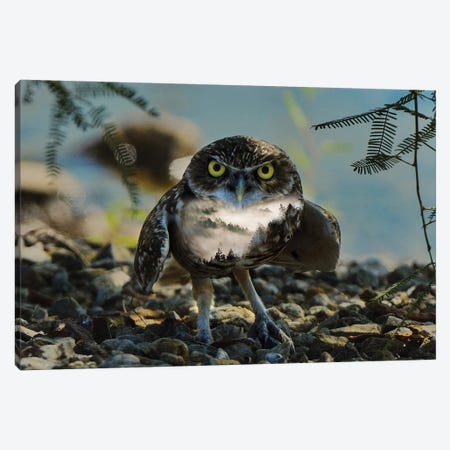 Wise Owl Canvas Print #PAH62} by Paul Haag Canvas Artwork