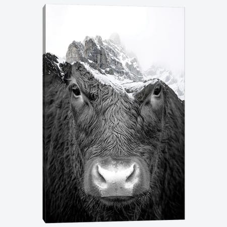 Bull Canvas Print #PAH71} by Paul Haag Art Print