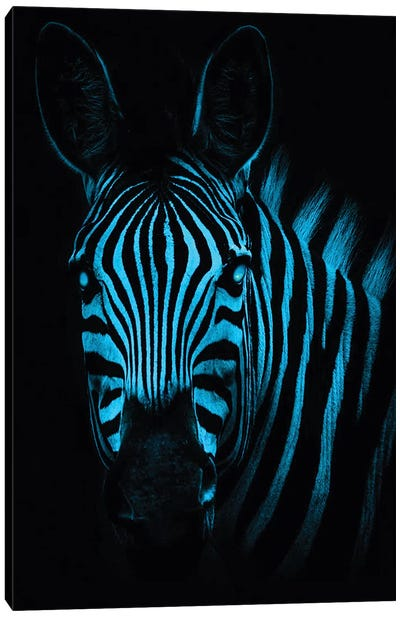 Cool Zebra Canvas Art Print