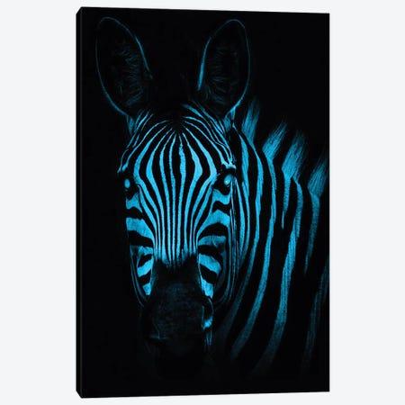 Cool Zebra Canvas Print #PAH73} by Paul Haag Art Print
