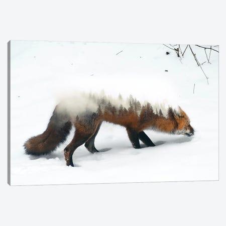 Winter Fox Canvas Print #PAH99} by Paul Haag Canvas Art Print